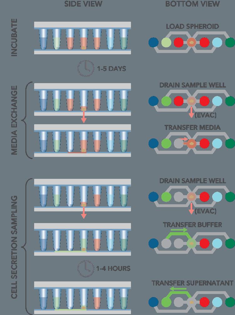 3D Cell Assay Workflows