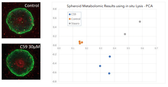 spheroid metabolomic results