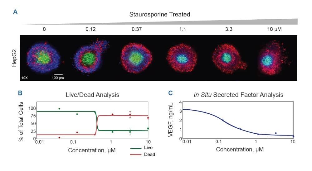 HepG2 spheroids treated with increasing Staurosporine; staining and in situ sampling