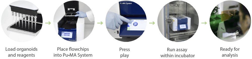 Assay Workflow