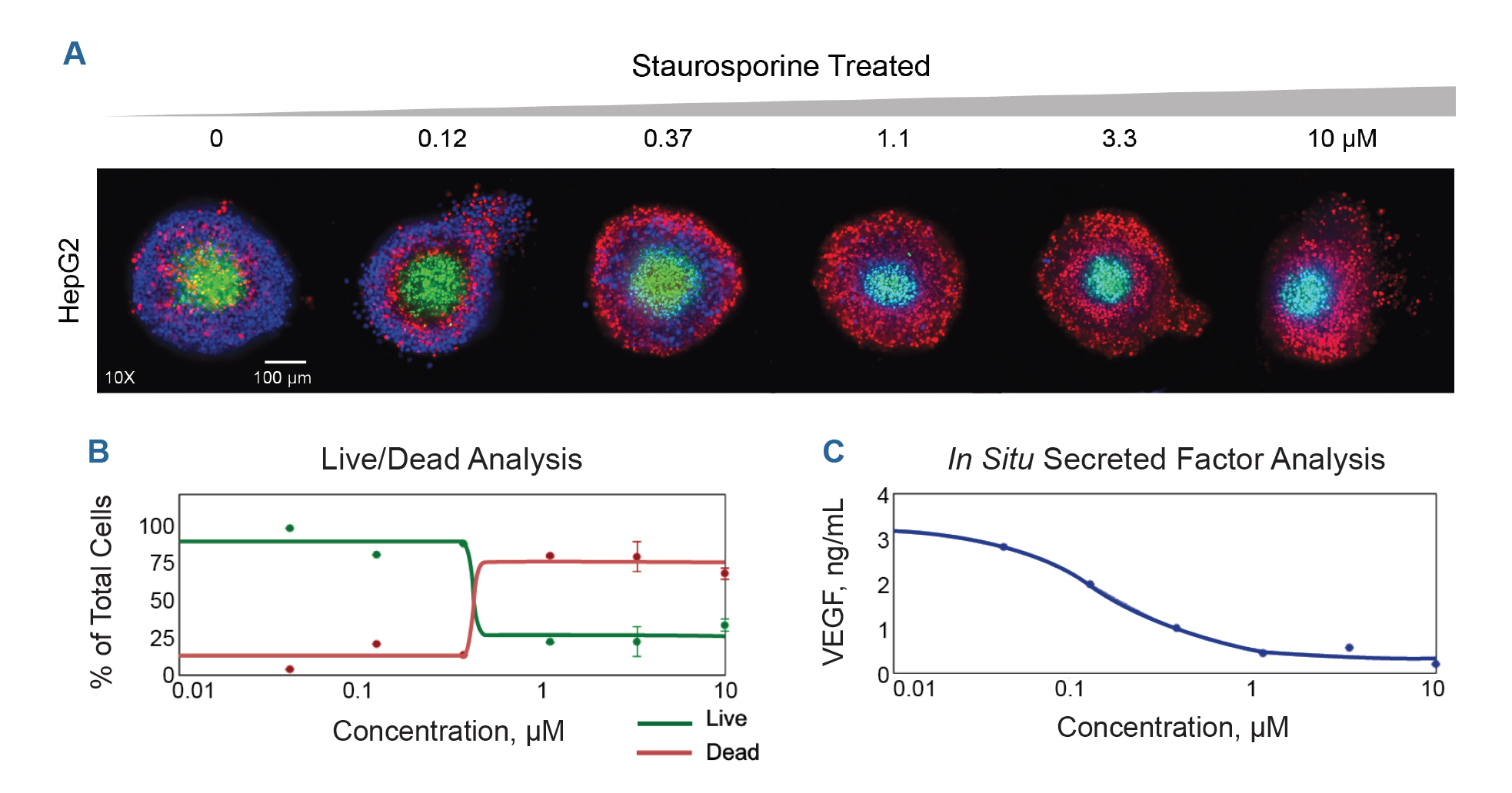 HepG2 spheroids treated with increasing drug concentration and stained