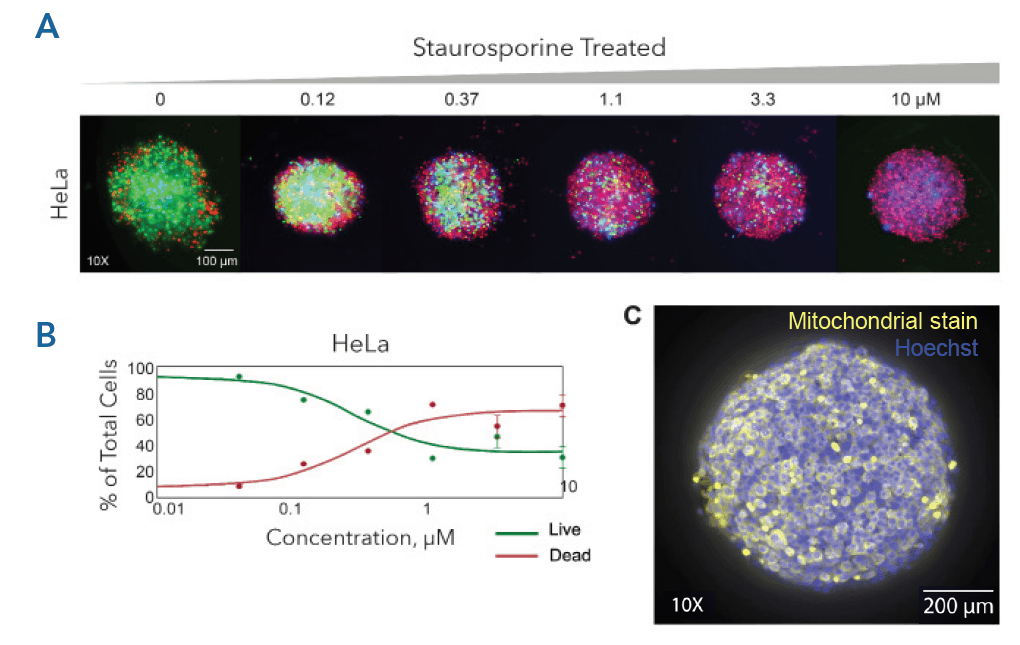 Multifunctional profiling of spheroids
